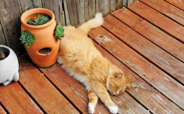 Cat laying beside potted plant