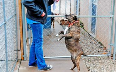 Dog standing on hind legs by caretaker