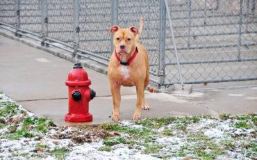 Dog standing by hydrant