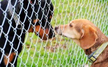 dogs sniffing through fence