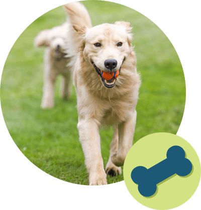 Dog and bone icon
